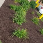 ECIS-landscaping1